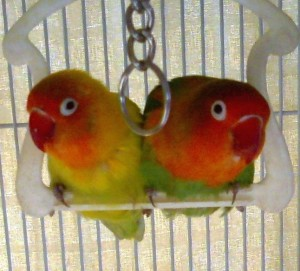 Lovebirds Fight Prostate Cancer